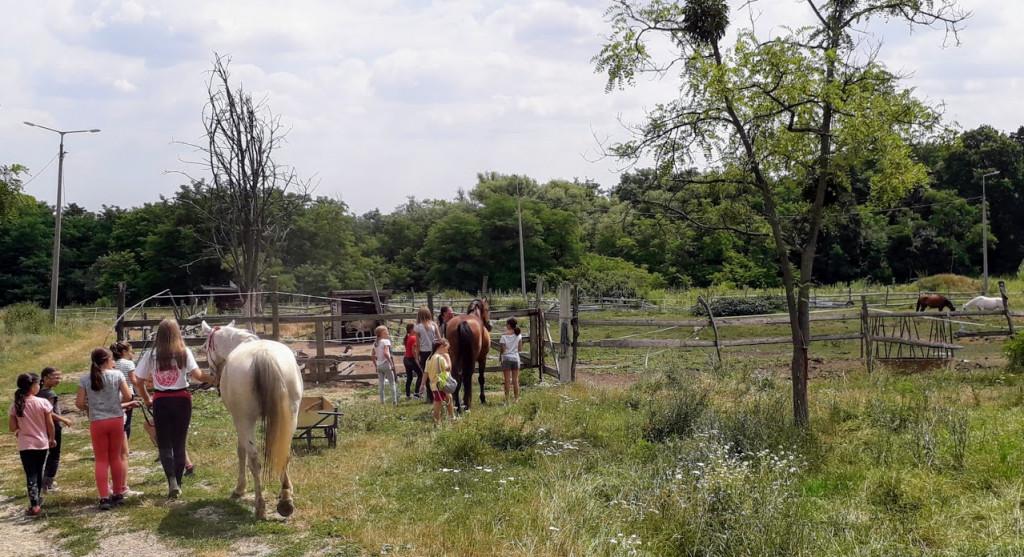 lovakatkiser