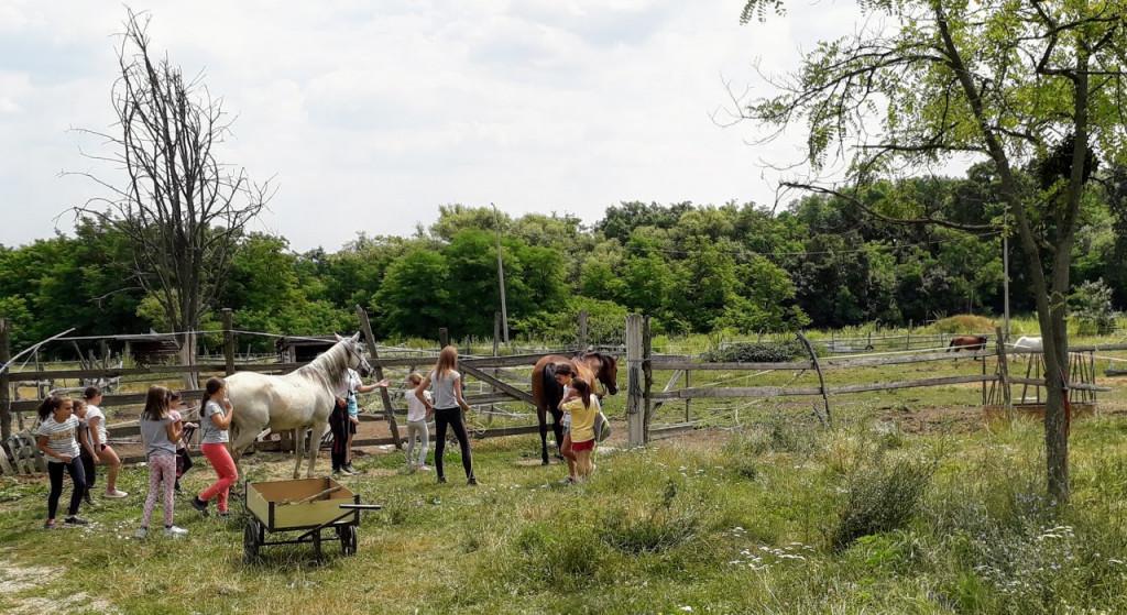 lovakatkiser1